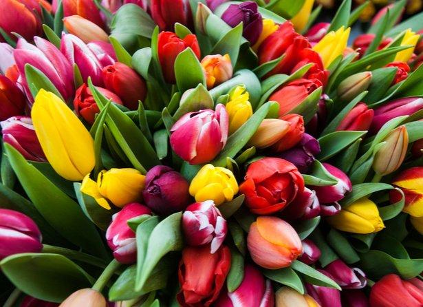 Quelles Sont Les Fleurs Du Printemps